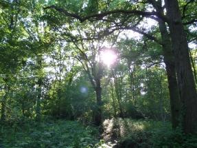 in het magische bos van dinsdag aan de Rozenstraat
